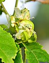 Passion Flower by Marilynne in Plants