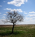 Prairie Tree by fotojack in Anything & Everything