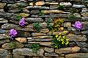 flower wall
