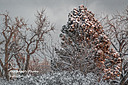 Winter by sfaribault in Member Albums