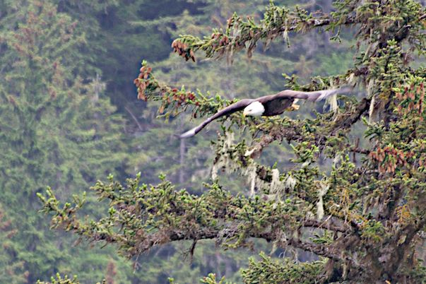 Flight of the Eagle by Joseph Bautsch in Member Albums