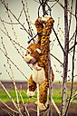 Monkey on a tree... by stamatisg2002 in Member Albums